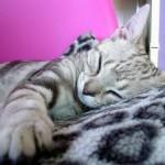 Soneca depois do almoço (Foto: Divulgação)