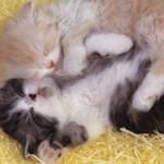 Filhotes em plena soneca (Foto: Divulgação)
