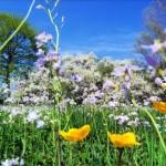 As flores começam a brotar na primavera. (Foto:Divulgação)