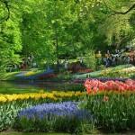 Paisagem do maior jardim de flores do mundo. (Foto:Divulgação)