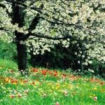 A natureza durante a primavera adquire novas cores. (Foto:Divulgação)