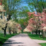 Uma linda paisagem de primavera para passear. (Foto:Divulgação)