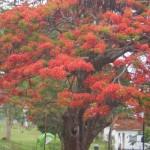 Árvore florida. (Foto:Divulgação)