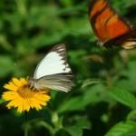 Os animais se reproduzem na primavera. (Foto:Divulgação)