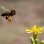 A concentração de pólen no ar aumenta com a primavera. (Foto:Divulgação)