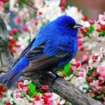 A primavera encanta com as suas cenas. (Foto:Divulgação)