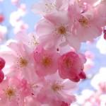 O reflorescimento é uma característica da primavera. (Foto:Divulgação)