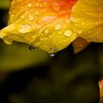 A natureza apresenta detalhes lindos na primavera. (Foto:Divulgação)