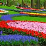 Parque de flores na Holanda durante a primavera. (Foto:Divulgação)
