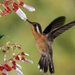 Beija-flor aproveitando sua estação favorita. (Foto:Divulgação)