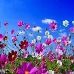 A primavera tem paisagens coloridas. (Foto:Divulgação)