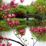 Os ambientes naturais ficam mais bonitos na primavera. (Foto:Divulgação)