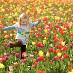 Um belíssimo campo de flores. (Foto:Divulgação)