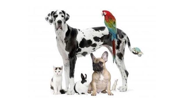 Dia 04 de outubro é dia dos animais (Imagem: Divulgação)