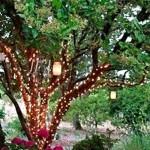 Árvore decorada com luzes de Natal.(Foto: Divulgação)