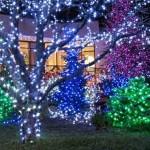 Jardim com luzes. (Foto: Divulgação)