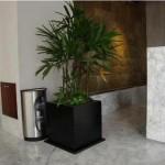 A Palmeira-ráfia é muito utilizada em ambientes internos (Foto: Divulgação)