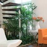 A Palmeira-ráfia não gosta de sol, vento e água, em excesso (Foto: Divulgação)
