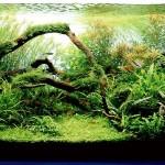 Plantas indicadas para aquário