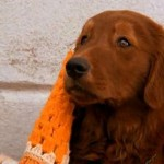 'Lembranças de outra Vida'  fala sobre um homem que morre e volta a vida no corpo de um cachorro. (Foto: Divulgação)