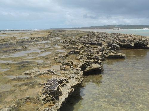 Os corais de Maceió encantam muito (Foto: Divulgação)