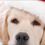 Cachorro Noel (Foto: Divulgação)