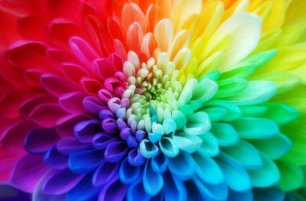 Até as flores tem significados importantes para o Réveillon (Foto: Divulgação)