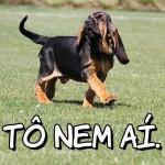 Um cão engraçadinho. (Foto:Divulgação)