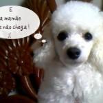 Poodle com saudade da dona. (Foto:Divulgação)