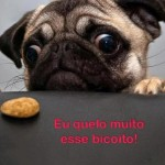 Tudo or um biscoito. (Foto:Divulgação)