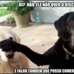 Cachorro trapaceiro. (Foto:Divulgação)