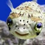 Um peixe fofo. (Foto:Divulgação)