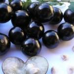 A jaboticabeira também pode ser plantada na sacada. (Foto: divulgação)