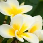 As flores podem ser cultivadas na sacada. (Foto: divulgação)