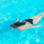 Como cuidar dos cabelos depois do cloro da piscina