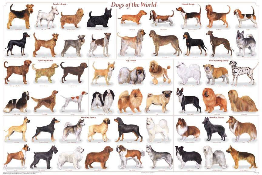 Raças mais conhecidas de cães (Foto: Divulgação)