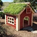 Casinha de cachorro com um jardim no teto. (Foto:Divulgação)