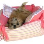 O cão precisa ter o seu próprio abrigo. (Foto:Divulgação)