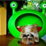 Casinha divertida para o pet. (Foto:Divulgação)