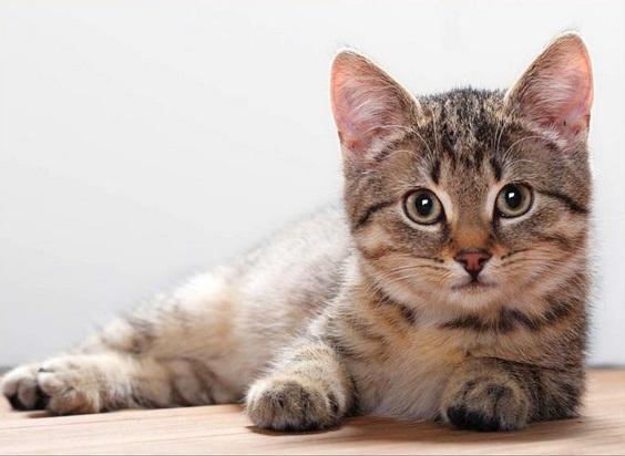 Tenha uma higiene rigorosa com o seu gatinho de estimação (Foto: Divulgação)