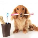 Cães podem roer ossos?