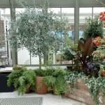 Construção interna em alvenaria para abrigar as plantas (Foto: Divulgação)
