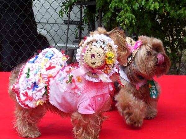 O casal de cachorros se diverte na fantasia (Foto: Divulgação)
