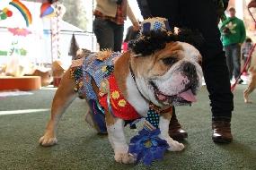 Roupas de festa junina para cães: fotos