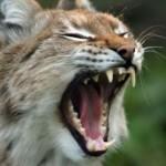 Parece uma pessoa gritando, não é mesmo? (Foto: Divulgação)