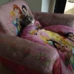Aconchegando-se no sofá (Foto: Divulgação)
