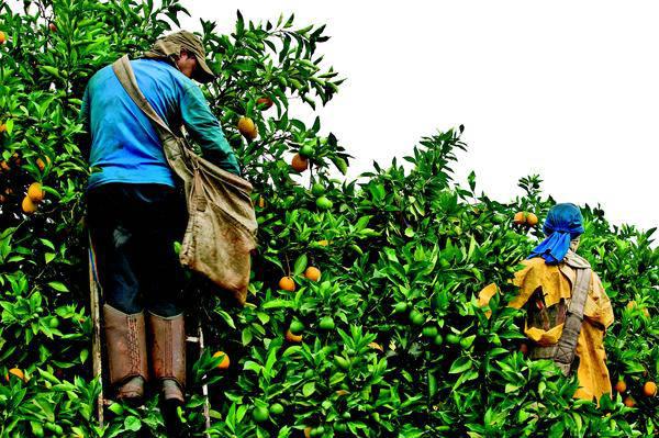 Em parceria com o Pronatec, o Senar MG oferece qualificação gratuita para os moradores do campo (Foto: Divulgação)