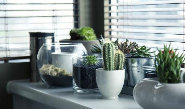 Vasos de Vidro para Decoração na 25 de Março 1
