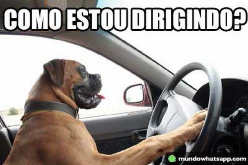 Dirigindo (Foto: Reprodução Internet)