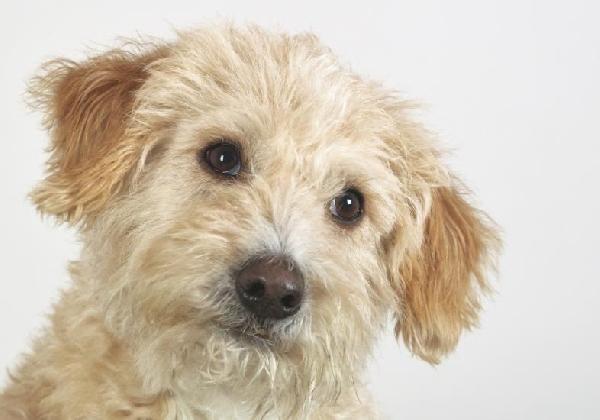 Os cães precisam de carinho e atenção (Foto Divulgação: MdeMulher)